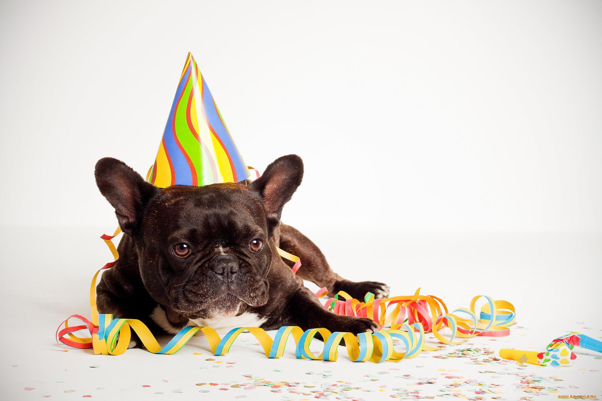 день рождения у собаки поздравление фото